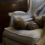 Cashmere and Alpaca Raccoon Fur Trim Throw